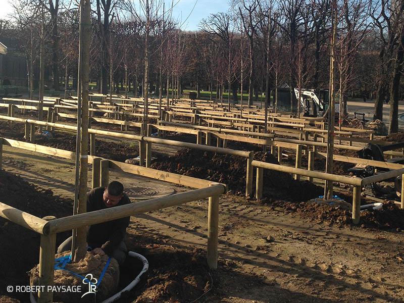 Plantations d'arbres
